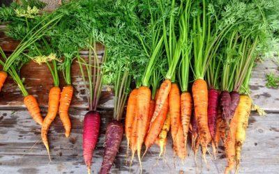 Maggio, mese dell'ortaggio: come seminare le carote.