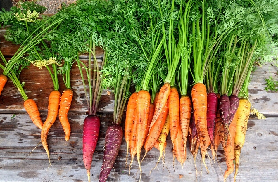May: Carrots, and How to Plant Them